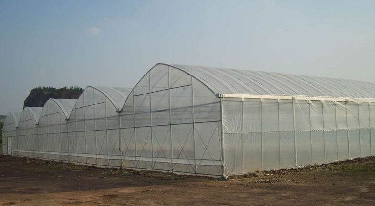 连栋拱形薄膜温室