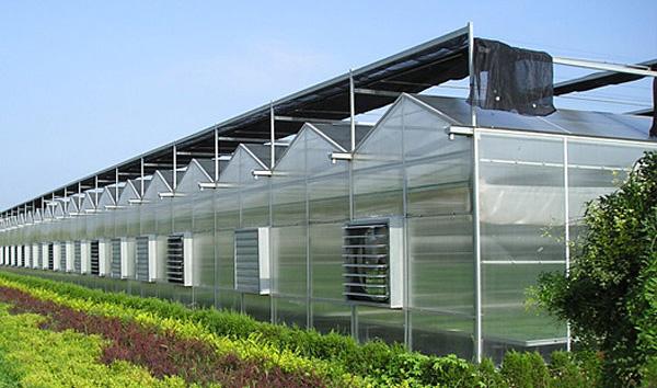 简易薄膜连栋温室大棚