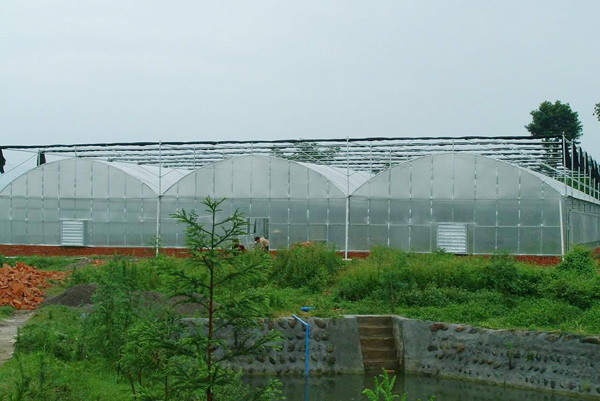 薄膜连栋温室大棚建造