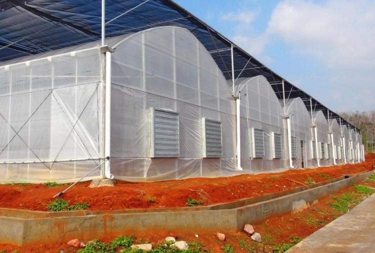薄膜连栋温室大棚建设
