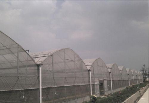 薄膜温室大棚工程案例05
