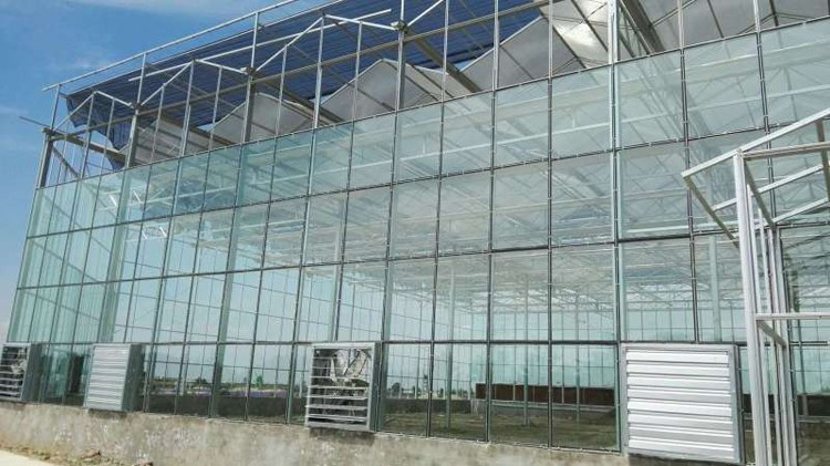 玻璃温室大棚工程案例04