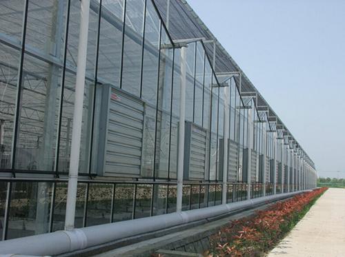玻璃溫室大棚工程案例06