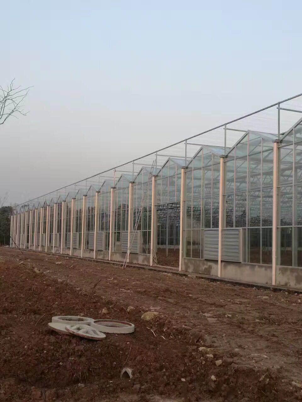 大棚玻璃温室