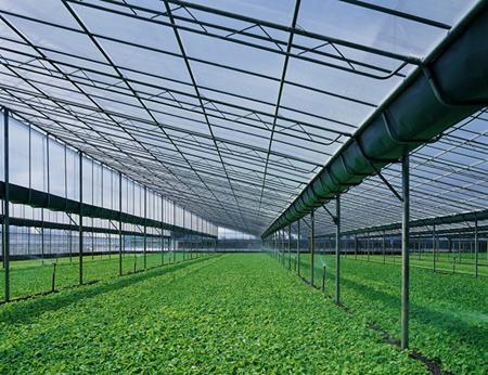 河北/衡水连栋温室大棚怎样合理选址和建造