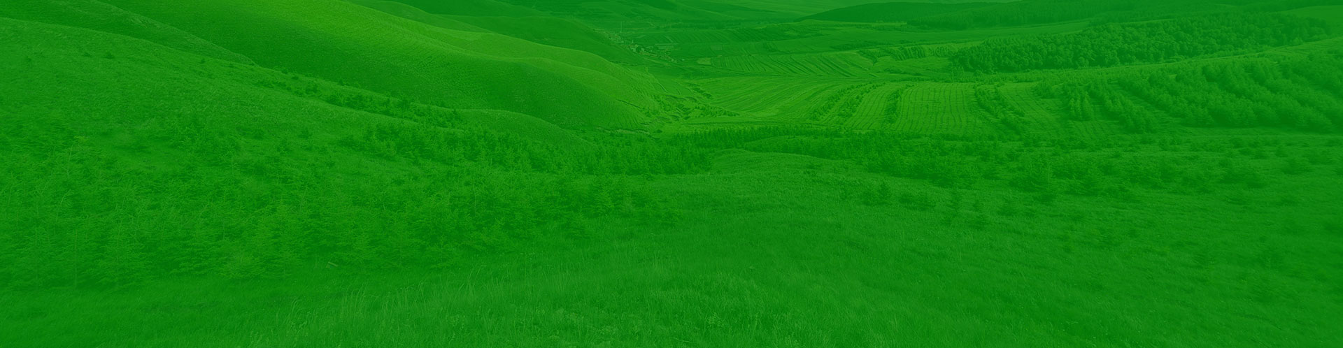 成都绿植墙:把墙上种满绿植,看看这些垂直绿化墙,看一眼就被迷得挪不开眼