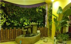成都绿植墙:把山山水水搬回家,室内绿化植物墙大全