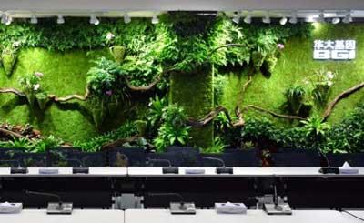 华大基因室内植物墙景观造型设计