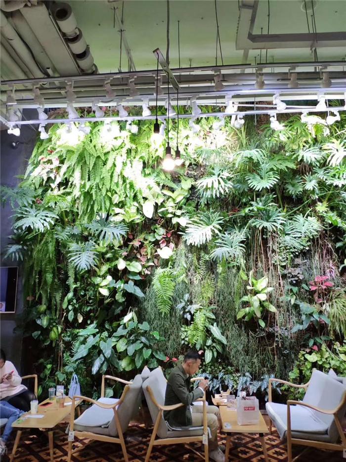 立体绿化植物墙