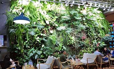 咖啡连锁公司立体绿化植物墙设计案例