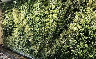 成都绿植墙|平安保险墙体绿化工程案例