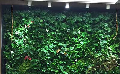 全国连锁火锅品牌垂直绿化植物墙工程案例