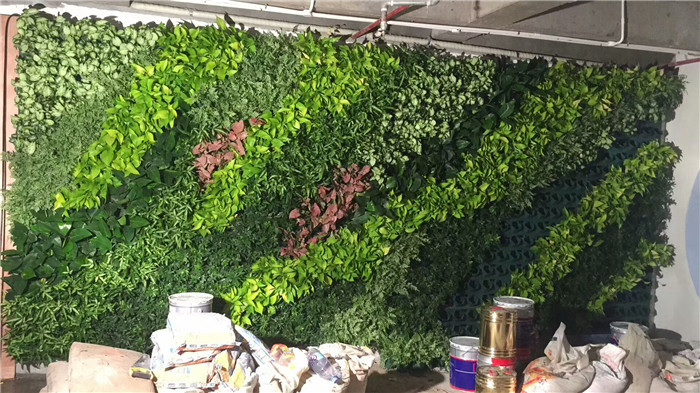 办公室绿化植物墙