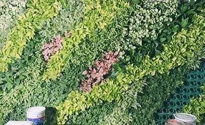 办公室绿化植物墙设计