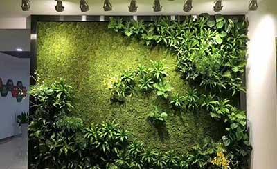 网络科技公司办公室绿植墙工程案例