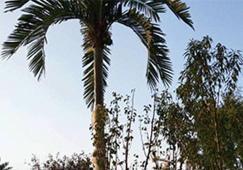 椰子仿真树