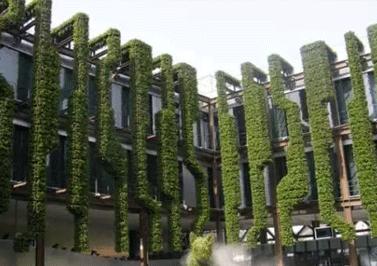 成都垂直绿化墙公司