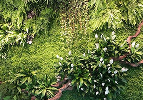四川造型生态绿雕厂家