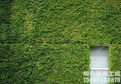 成都绿化植物墙设计