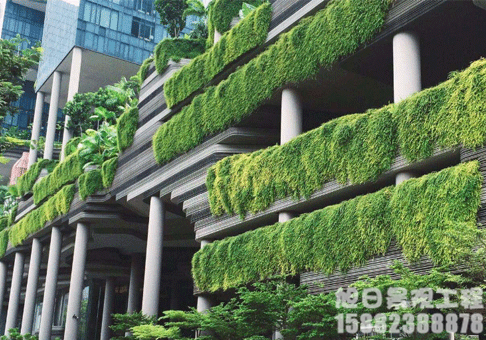 立体垂直绿化