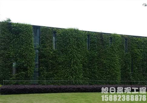 景观垂直绿化