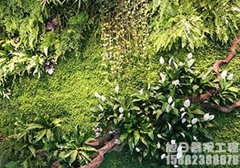 苔藓墙垂直绿化