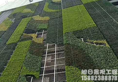 四川花瓣绿植墙