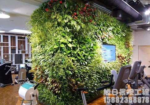 四川美化绿植墙