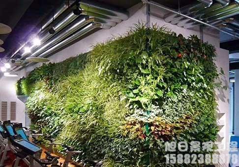 四川仿真绿植墙