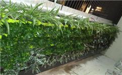 成都绿植墙定制公司