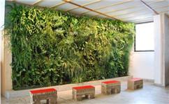 成都生态绿植墙公司
