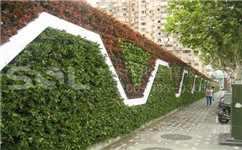 成都垂直绿化墙