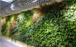 成都绿植墙设计