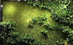 因为植物墙,这些行业得到了更多的促进和发展