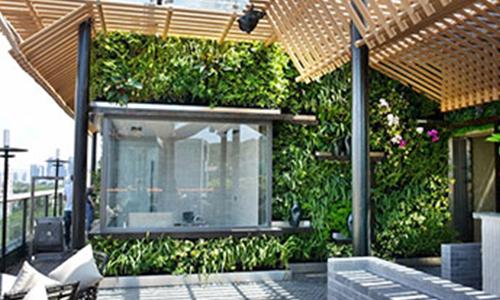 壁挂植物墙种什么绿植,最好看!