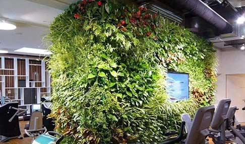 成都绿植墙