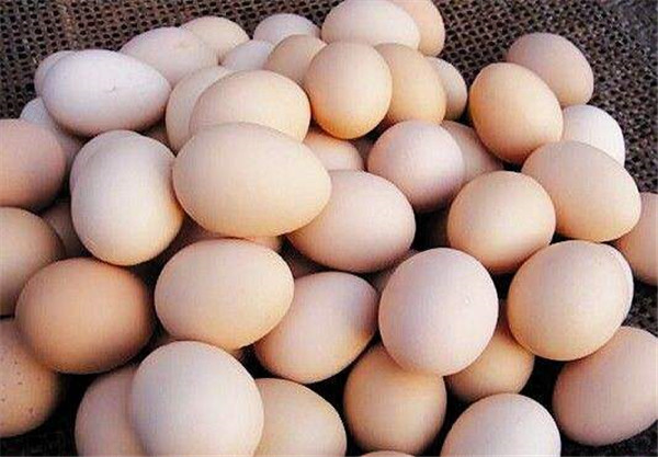 襄阳土鸡蛋批发