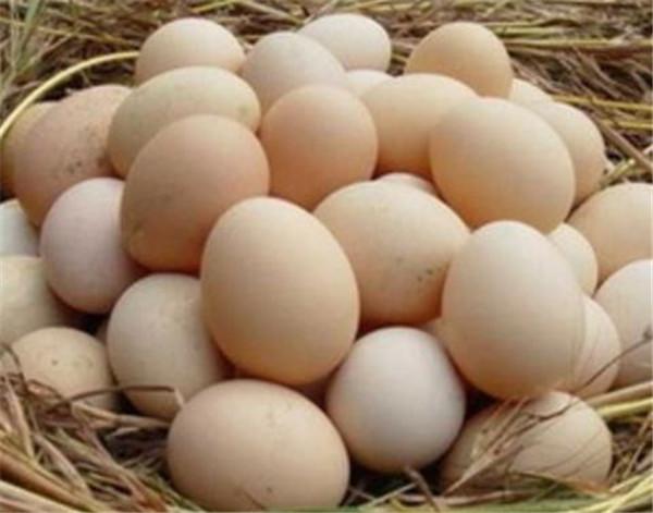 随州土鸡蛋