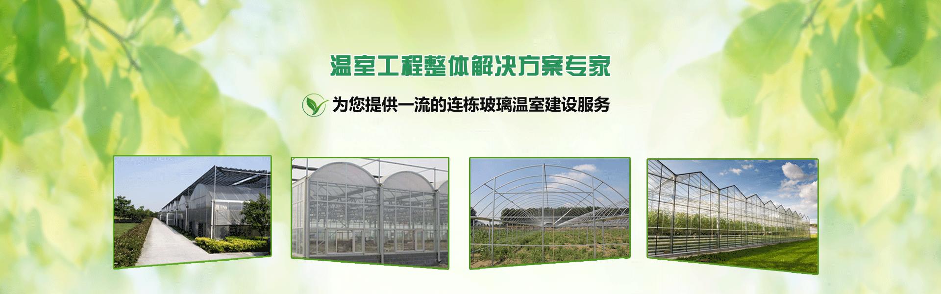连栋玻璃温室大棚