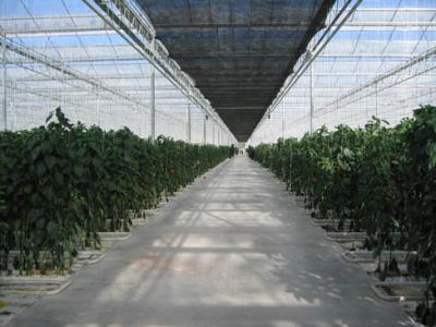 上海生态玻璃温室大棚