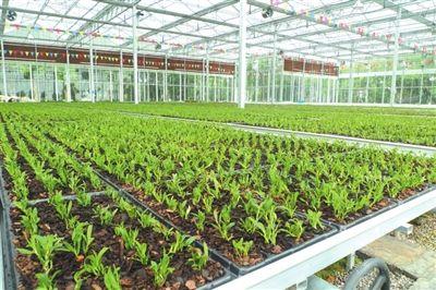 玻璃温室大棚立柱无土栽培建设注意事项有哪些?