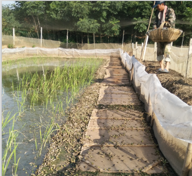 青蛙基地生态养殖