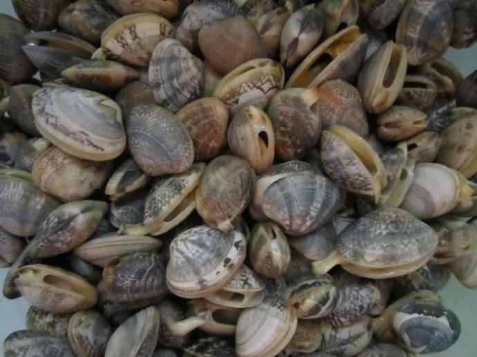 襄阳海鲜市场哪家好尚卓海鲜值得信赖