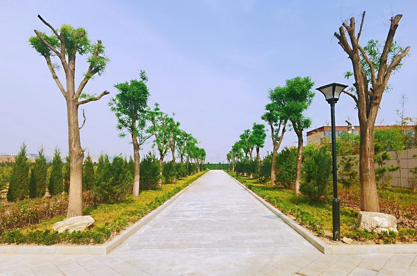 秦汉上林园绿植