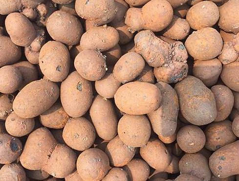 轻质陶粒厂家带你了解养花选择陶粒的益处