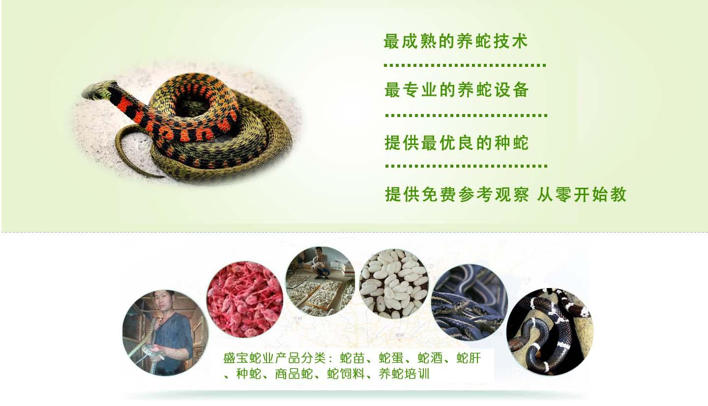 江西养蛇告诉你蛇为什么要冬眠