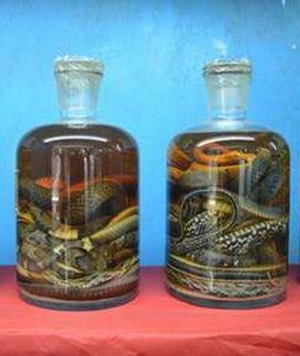 江西养蛇告诉你毒蛇泡酒不能乱喝