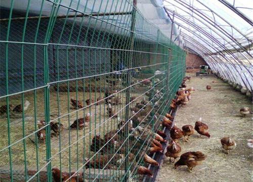 云南養雞鐵絲網圍欄