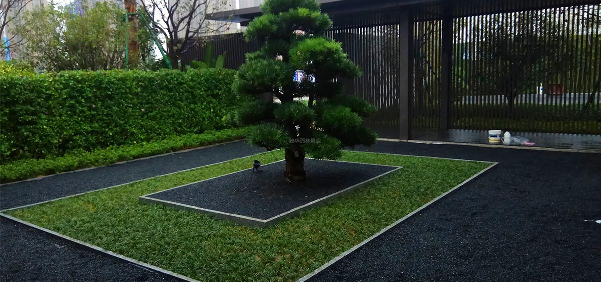 福建屋顶绿化