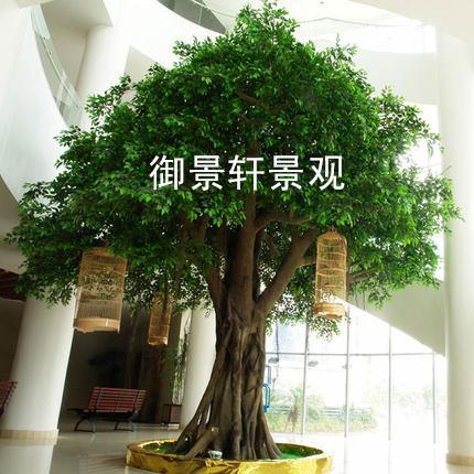 观仿真榕树